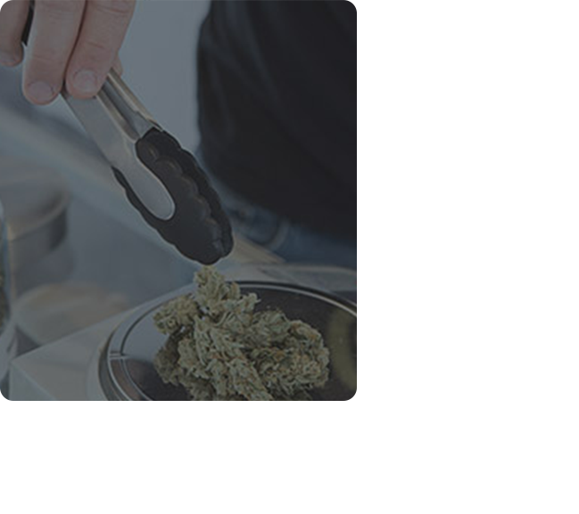 medical marijuana card in new york