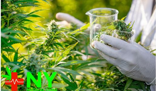 Medical Marijuana NYC